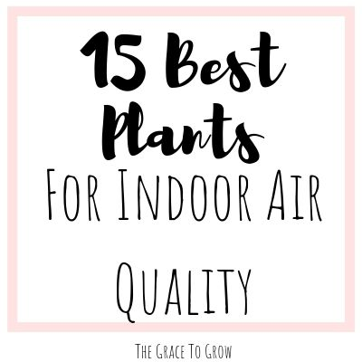 plants-for-indoor-air-quality