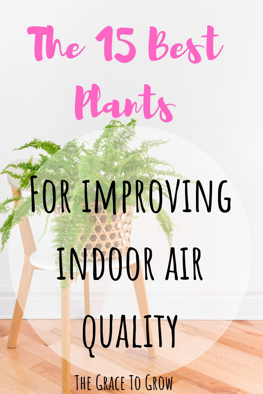 plants-for-improving-indoor-air-quality-pinterest-pin-with-boston-fern