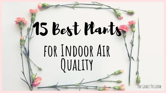 15-best-plants-for-indoor-air-quality